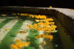 在喷泉的浮动花瓣 免版税库存照片