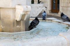 在喷泉的鸽子立场 免版税库存照片