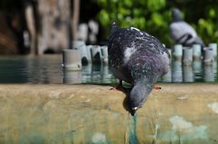 在喷泉的鸽子,雅典,希腊 库存照片
