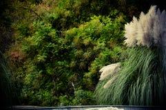 在喷泉附近的植被 库存图片