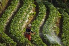 在喷洒生物化学制品的chiangmai的北泰国小山部落 免版税库存照片