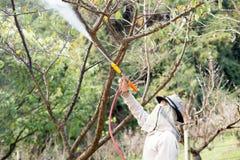 在喷洒insecticidefertilizer的土井Ang Khang Chaing Mai未认出的花匠对他的植物 免版税库存图片
