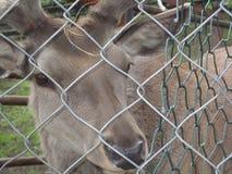 在囚禁的动物 免版税库存照片