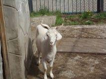 在囚禁的动物 免版税库存图片