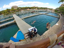 在囚禁的海豚 库存图片