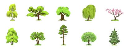 在四个季节-春天,夏天,秋天,冬天的落叶树 自然和生态 绿色树导航例证 皇族释放例证