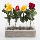 在四个花瓶的四朵玫瑰,被隔绝 库存照片