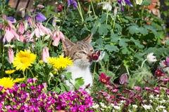 在四季不断的花之间的一只暗藏的小猫在庭院里 库存图片