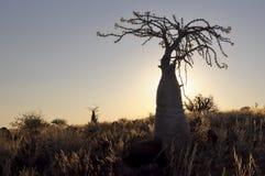 在回到光的瓶结构树 免版税库存照片