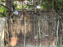 在围场金属化滤网和木篱芭有小门的长满与常春藤灌木,被环绕的树 库存图片