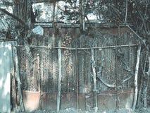 在围场金属化滤网和木篱芭有小门的长满与常春藤灌木,被环绕的树 免版税库存图片