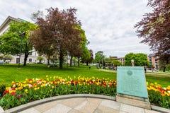 在国会大厦大厦旁边的学院公园在阿尔巴尼,纽约 图库摄影