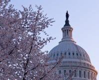在国会大厦dc圆顶日出之后 图库摄影