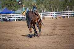 在国家圈地的无鞍顽抗的野骑马 免版税库存照片