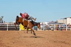 在国家圈地的无鞍顽抗的野骑马 免版税库存图片