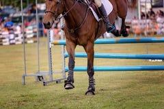 在国家展示的马跳跃的障碍 库存照片