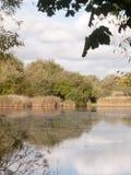 在国家水之外的Summer金黄湖场面顶面 免版税库存照片