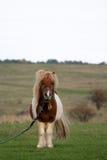 在国家边的小马 免版税库存图片