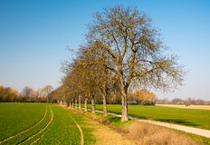 在国家边的树胡同 免版税库存照片