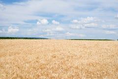 在国家边的麦田 免版税库存照片