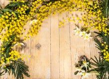 在国际妇女节和复活节的含羞草 免版税库存照片