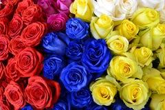 在国际花的不同的色的玫瑰 库存图片