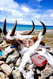 在图腾的动物头骨 免版税库存照片