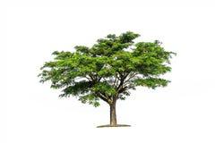 在图表的de白色背景高分辨率隔绝的树 免版税图库摄影