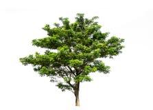 在图表的de白色背景高分辨率隔绝的树 库存图片