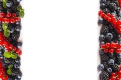 在图象边界的黑蓝色和红色食物与拷贝空间的文本的 成熟蓝莓、黑莓和红浆果与薄荷的地方教育局 免版税库存图片