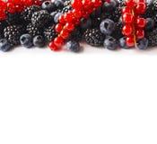 在图象边界的黑蓝色和红色食物与拷贝空间的文本的 成熟蓝莓、黑莓和红浆果在白色bac 库存照片
