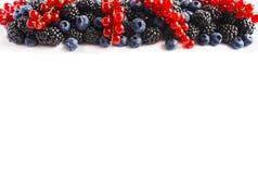 在图象边界的黑蓝色和红色食物与拷贝空间的文本的 成熟蓝莓、黑莓和红浆果在白色bac 免版税库存图片