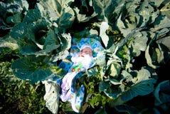 在圆白菜中的一个新出生的婴孩在庭院里 库存照片