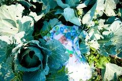 在圆白菜中的一个新出生的婴孩在庭院里 免版税库存照片