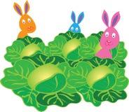 在圆白菜地的三小兔 图库摄影