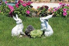 在圆白菜的野兔 免版税库存图片