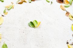 在圆的圈子框架的三片颜色下落的叶子 免版税库存图片