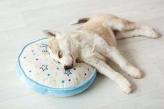 在圆的枕头1的睡觉小狗 免版税库存照片