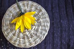 在圆的柳条背景的黄色洋姜在织地不很细温暖的织地不很细背景 秋天背景概念 免版税库存图片