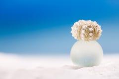 在圆的海玻璃的微小的野孩子壳海星与海洋 图库摄影