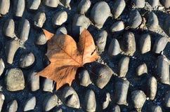 在圆石铺砌路面的秋天叶子 库存图片