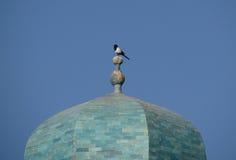 在圆顶的乌鸦 库存照片
