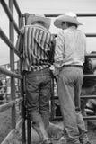 在圈地前的牛仔 免版税库存图片