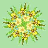 黄水仙 在圈子的装饰品 图库摄影
