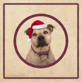在圈子的逗人喜爱的狗狗与红色格子花呢披肩样式,在老葡萄酒纸背景, 免版税库存照片