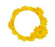 在圈子的黄色花 库存照片