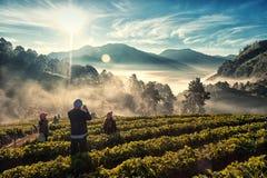 在土井Angkhang的早晨光 免版税库存照片