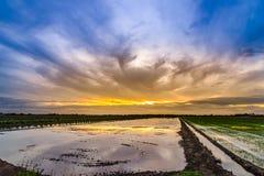 在土地的暮色时间为种植在米领域做准备 免版税图库摄影