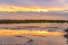 在土地的暮色时间为种植在米领域做准备 免版税库存图片