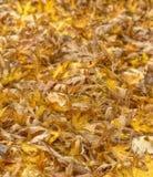 在土地的秋叶。 免版税库存图片